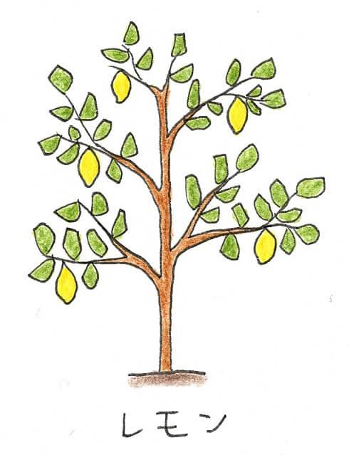 シンボルツリーにできる果樹(果物のなる木)-レモンのイラスト