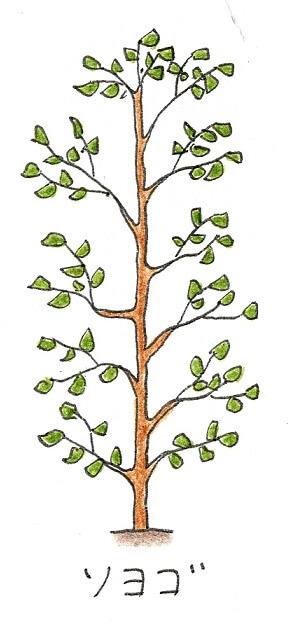 常緑樹のシンボルツリーにおすすめの庭木-ソヨゴのイラスト