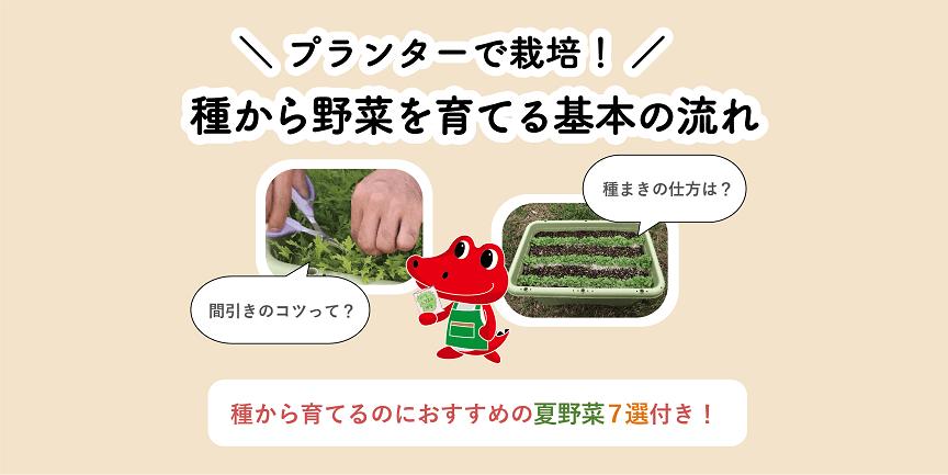 プランターで種から野菜を育てる基本の流れ|おすすめの夏野菜7選つき