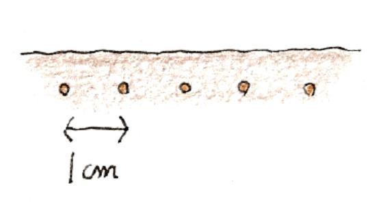 種のまき方ーすじまきの際の種のまき方説明イラスト
