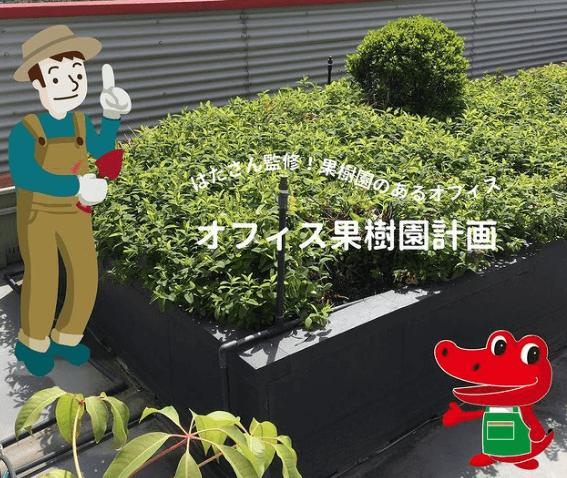 アルスケの近況_オフィス果樹園計画01