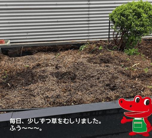 アルスケの近況_オフィス果樹園計画02
