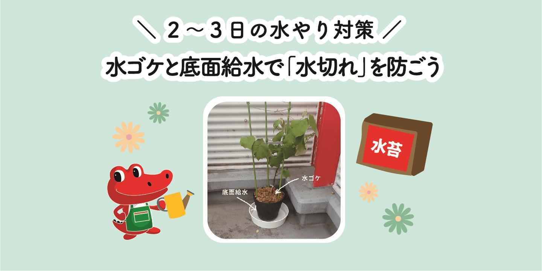 水ゴケと底面給水で植物の「水切れ」を防ごう