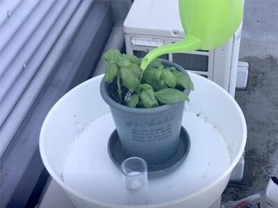 バジル苗の植え付け-水をやって植え替え完了